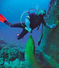 moray eel fish feed dive