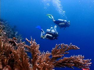 Wall Dive St Croix
