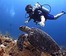 Dive Turtle