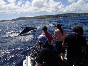 Whales in St. Croix